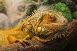 Опасные животные обитающие на Кавказе. Где и как их посмотреть?