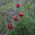 Восхождение на гору Лысая. Красивые горные цветы