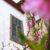 Весенние цветы на Кавказе. Персик цветёт в Пятигорске