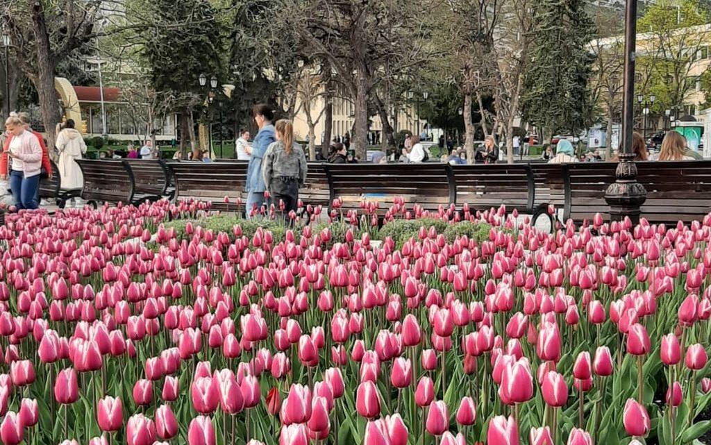 Массовое цветение тюльпанов в Пятигорске. Парк Цветник